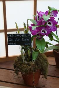 A finished product at the Orchid Exhibit!