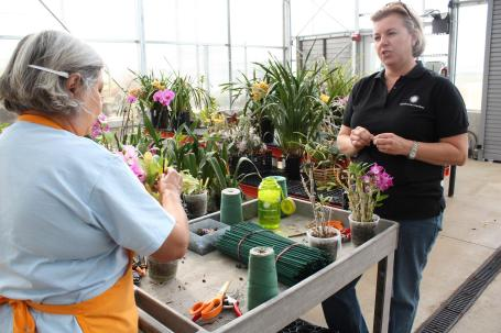 Orchid grower Sarah Hedean and volunteer Shahla Butler stake and tie Nobile Dendrobiums to prepare them for the Orchid Exhibit