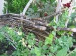 NMAH Garden's Wattle Fence