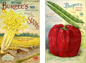 Images from the 1902 W. Atlee Burpee & Company Farm Annual. W. Atlee Bupee & Company Collection, Archives of American Gardens.