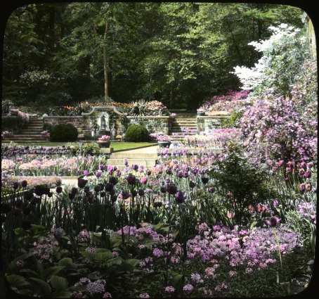 Tulips and other spring flowers at the Henry Francis du Pont Winterthur Museum and Gardens, circa 1930. Collection of the Archives of American Gardens.