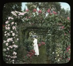 Unidentified rose garden, circa 1930. J. Horace McFarland Collection, Archives of American Gardens.