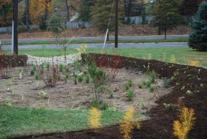 The Rain garden at Grace Episcopal Day School this past fall.
