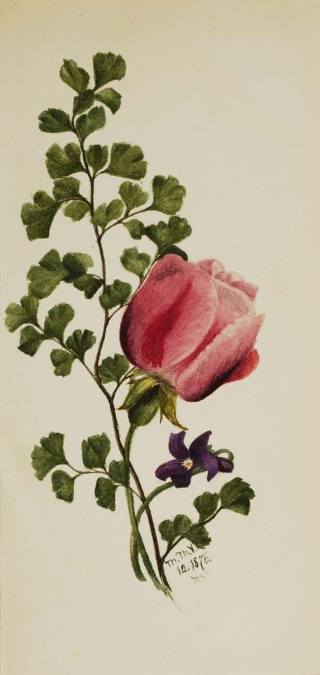 Mary Vaux Walcott, Pink Rose with Violet, watercolor on paper, 1876. Image courtesy of the Smithsonian American Art Museum.