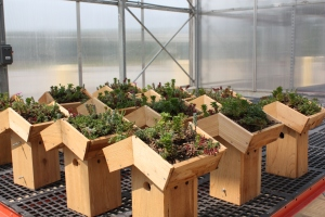 Green roof nesting boxes waiting to be installed at the Smithsonian Gardens greenhouses in Suitland, Maryland earlier this winter.