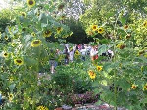 Image 12_Manistique Community Garden