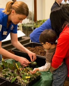 Potting orchids at Orchid Family Day 2013
