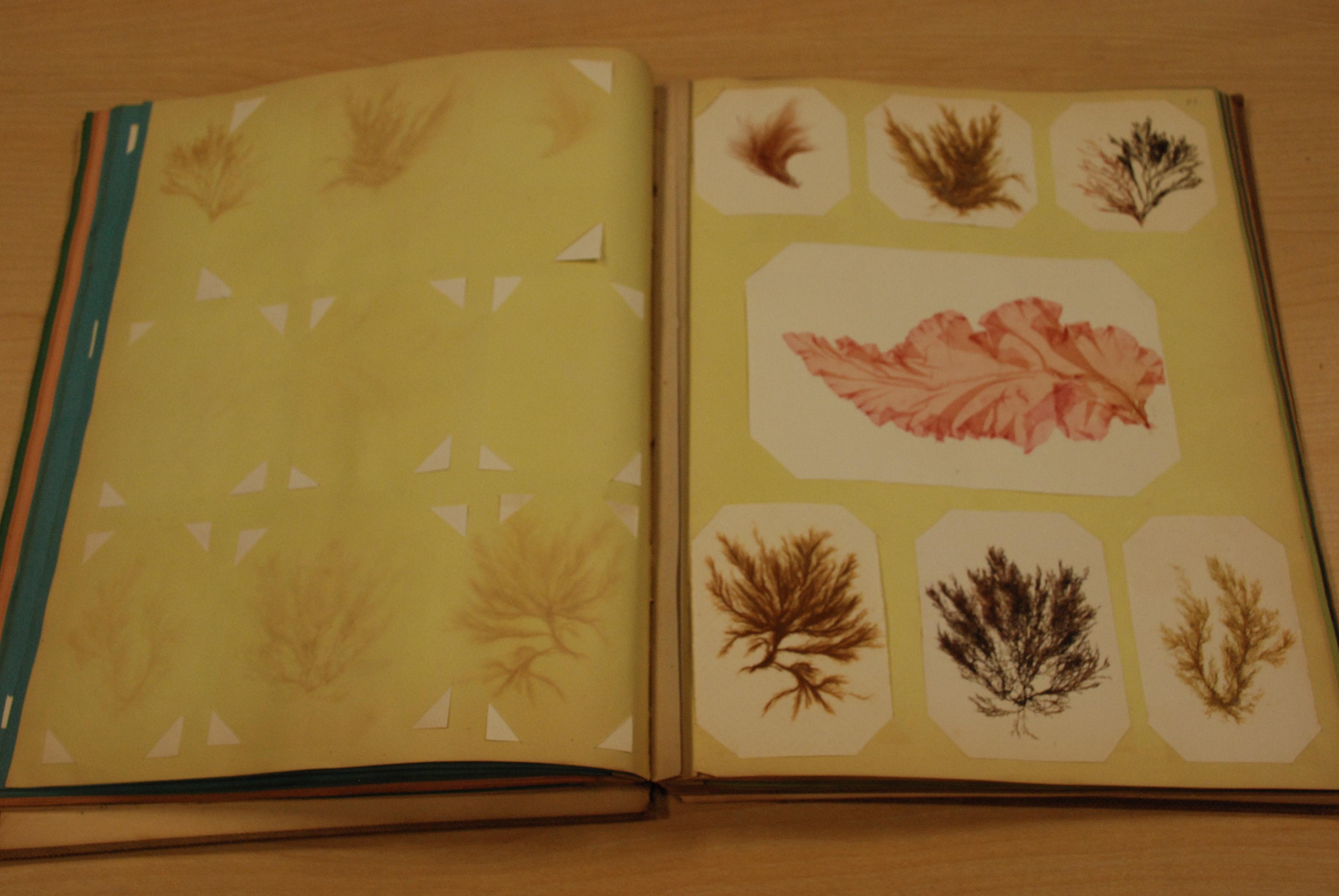 Scrap book meaning - Dsc_0110 Dsc_0111