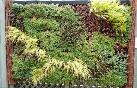 Green wall in the Ripley Garden