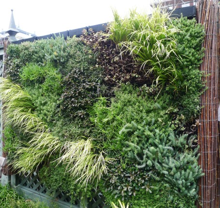 Living wall in the Ripley Garden