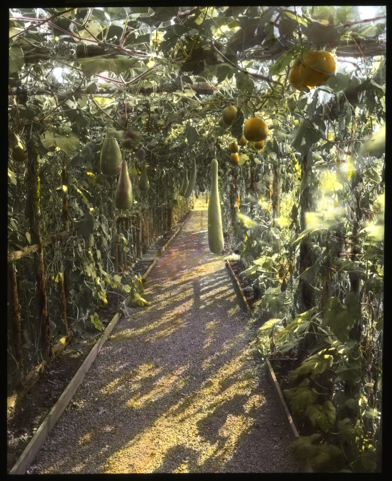Victory Garden | Smithsonian Gardens
