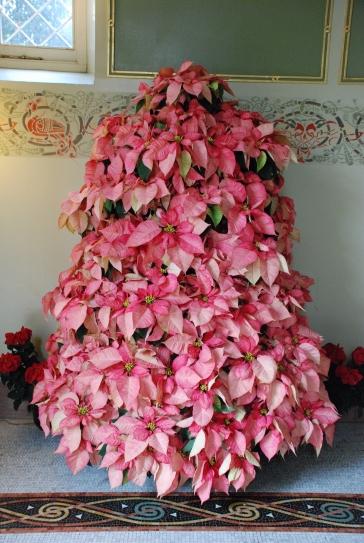 Poinsettia Tree