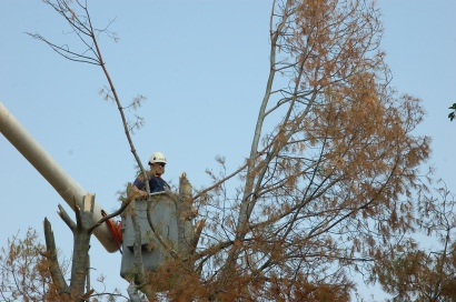Removing the top third of the tree.
