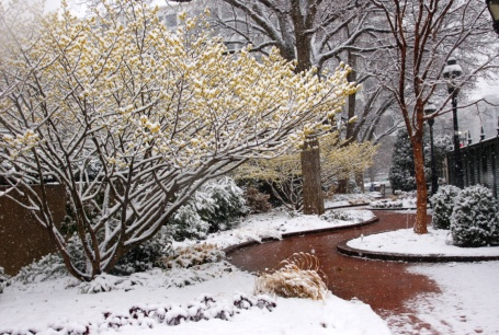 Ripley Garden wit ha dusting of snow on February 25, 2014.