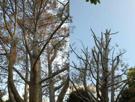 Snag, before and after