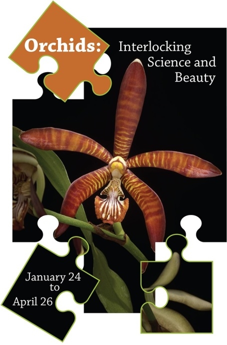 Orchid exhibit logo