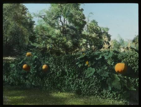 Marshall Garden, 1920. Smithsonian Institution, Archives of American Gardens.