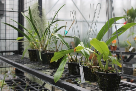 orchid specimens