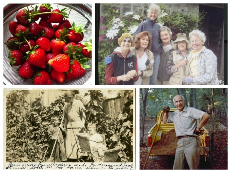 Collage of Community of Gardens stories