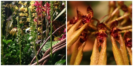 Plants from the Orchids: Interlocking Science and Beauty exhibition (Left) and a well-lit Bublaphyllum (right)