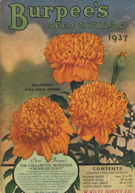 Burpee seed catalog from 1937 featuring the Collarette Marigold. Image from the Henry Gilbert Nursery and Seed Trade Catalog Collection, National Agricultural Library