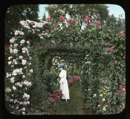 Glass lantern slide of roses