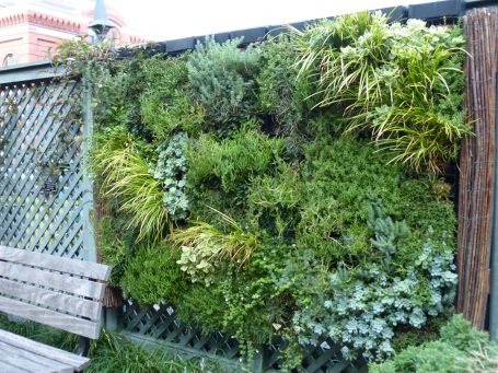 The 2014 Ripley Garden green wall. My first attempt at growing vertically in the garden.