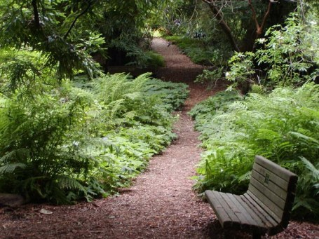 A Redwood Trail, in the San Francisco Botanical Garden located in Golden Gate Park.