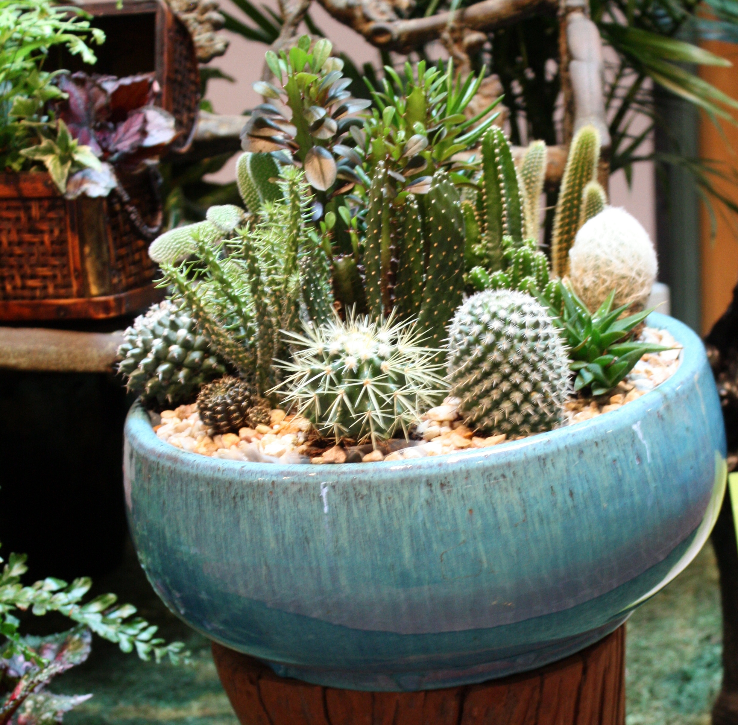 Dish garden of succulents