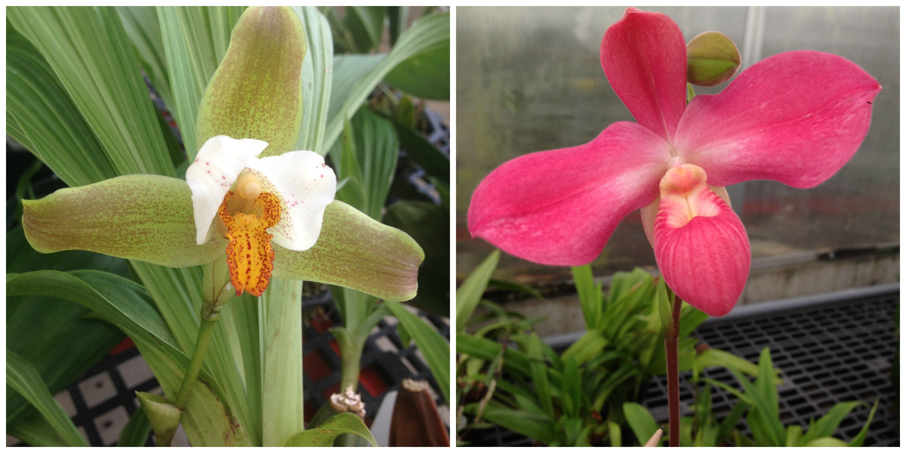 Rare and Beautiful Orchids (and a Horticulturist) Find Home at Smithsonian Gardens