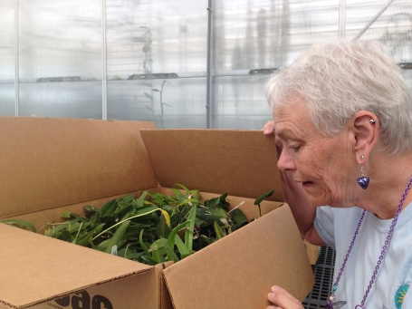 Anne, a Smithsonian Gardens volunteer, assists Emily and the other greenhouse staff unpack boxes of donated orchids.