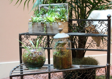 Assorted terrariums