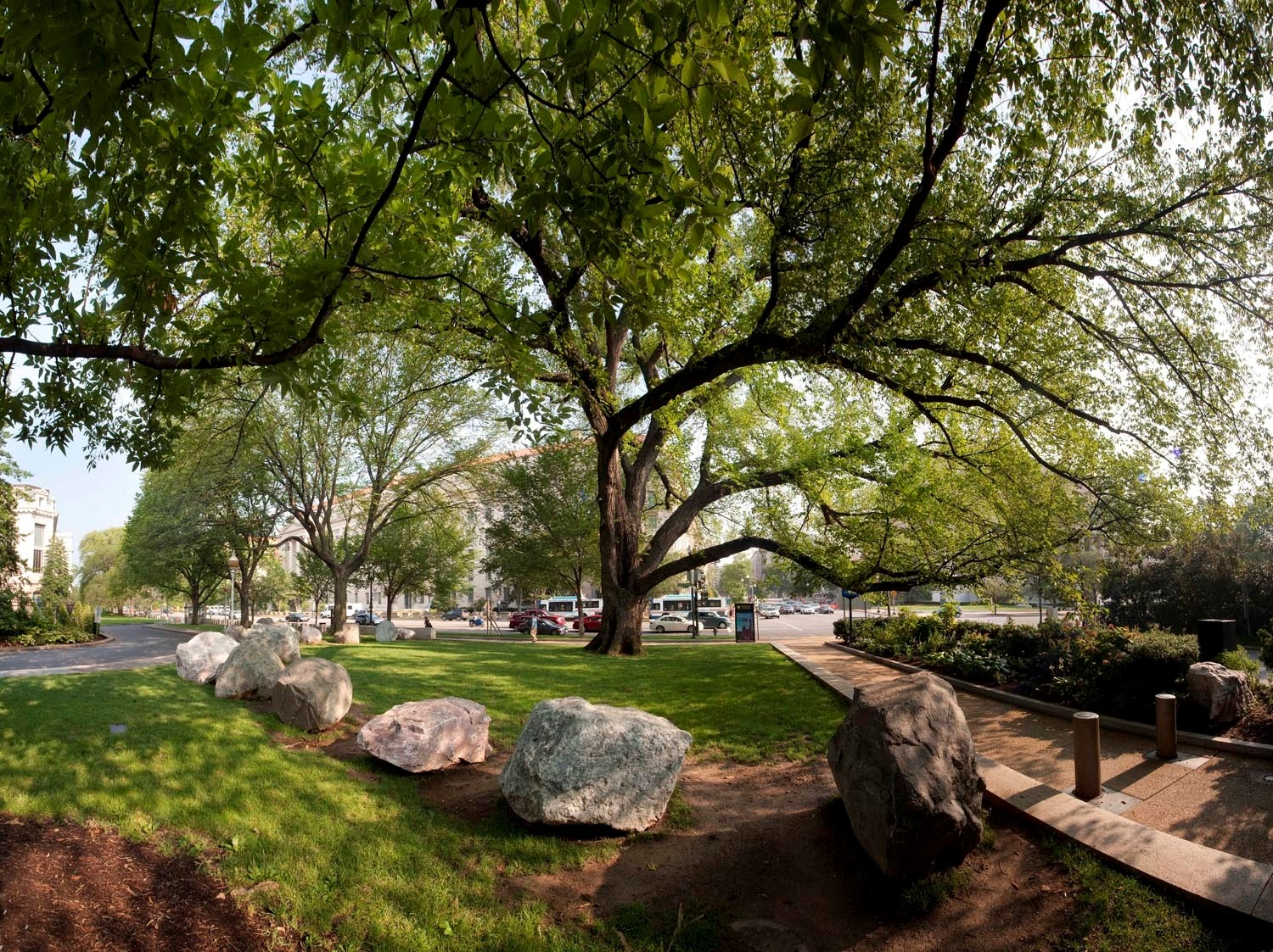 How the Smithsonian Gardens Tree Collection Benefits the Environment and Our Well-Being