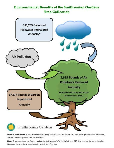 tree-collection-benefits-infographic