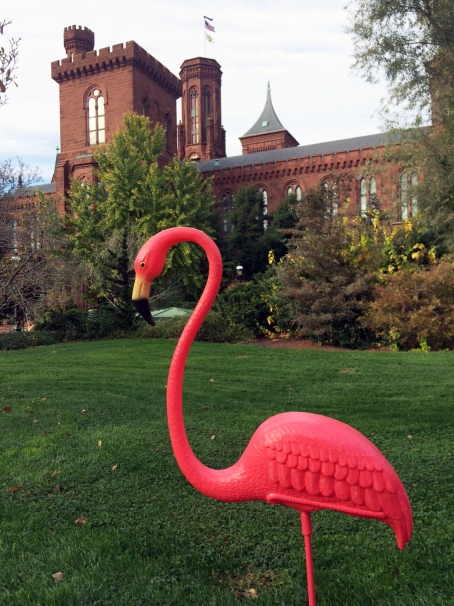 Pink Flamingo at the Smithsonian