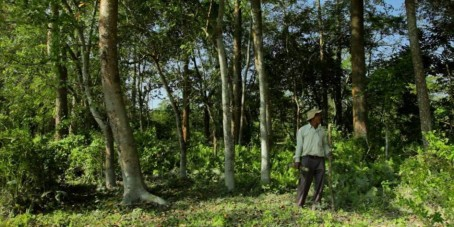 Jadav Payeng standing in the forest