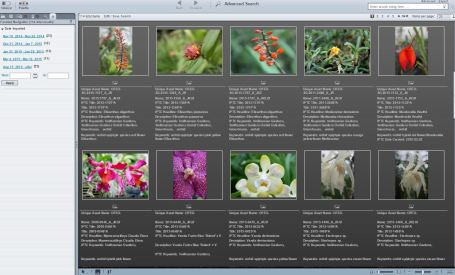 Orchid entries in Smithsonian's Digital Asset Management System